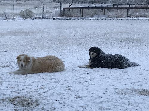 Teddy & Polar
